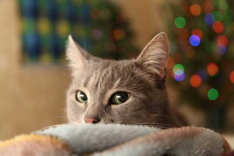 Pick Some Holiday Items and We'll Tell You What Type of Cat You Are
