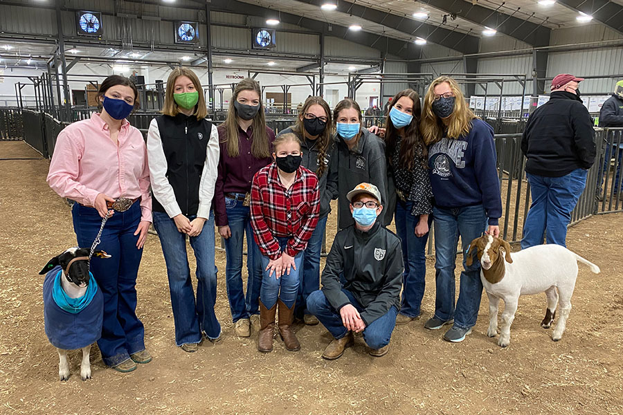 Gathered together in the show barn, FFA members  get ready to compete in the WCLA County show. Cedar Park participated in the goat, lamb and pig shows.