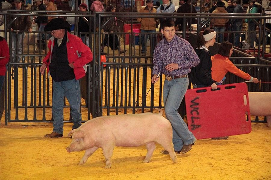 At+the+County+stock+show+in+January%2C+junior+Charlie+Hoppe+directs+his+pig.+The+competition+requires+the+competitors+to+look+at+the+judges+while+keeping+control+of+the+pigs.+%E2%80%9CIt+can+sometimes+be+really+difficult+to+control+the+pigs%2C%E2%80%9D+Hoppe+said.+%E2%80%9CKnowing+where+exactly+to+go%2C+all+at+the+same+time+keeping+an+eye+on+the+judges+and+your+surroundings%2C+really+makes+you+be+on+top+of+your+toes.%E2%80%9D