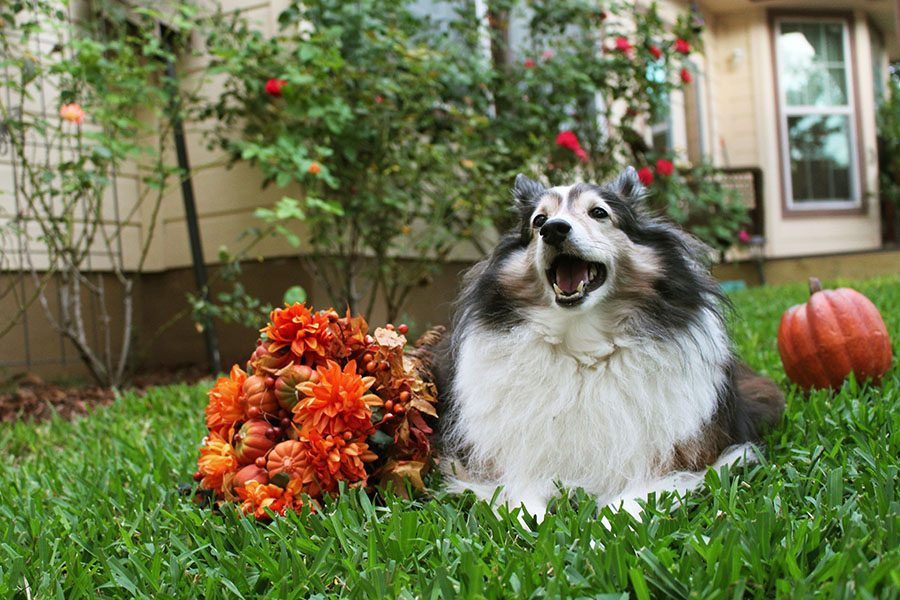 Photojournalism Fall Pet Portraits