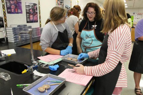 Anatomy and Physiology teacher, Nancy Matthias supervises a kidney dissection. Matthias believes that dissecting real organs and specimens enhances the learning abilities of the students.
